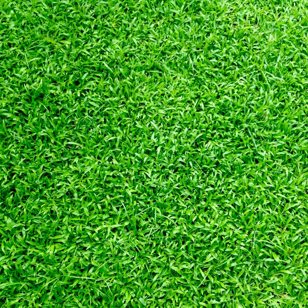Artificial Grass Murch Flooring